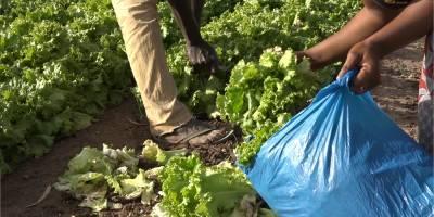 Maraichéculture au Burkina : Les pesticides dangereux dans nos assiettes !