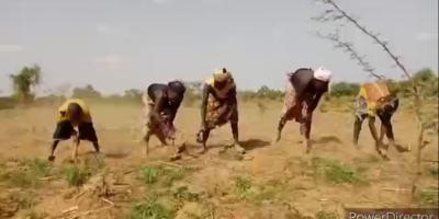 Insécurité : Le calvaire des paysans en zones à risque !