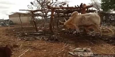 Insécurité : Agonie du secteur bétail au Yatenga !