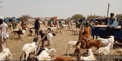Dori : Impact de l'insécurité sur le marché à bétail